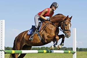 Обои для рабочего стола Верховая езда Лошадь Прыгает спортивные Девушки