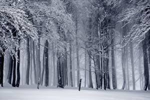 Фотография Лес Зимние Дерева Снега Туман
