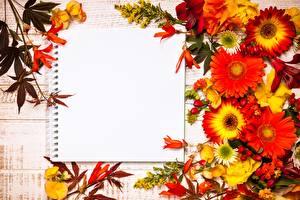 Фотографии Герберы Тетрадь Шаблон поздравительной открытки цветок
