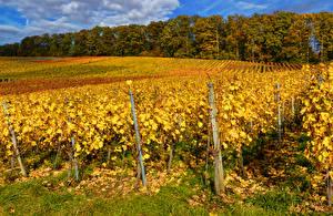 Обои Германия Осенние Поля Кустов Baden-Wuerttemberg Природа