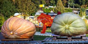 Картинка Германия Парк Осенние Тыква Pumpkin festival Пища