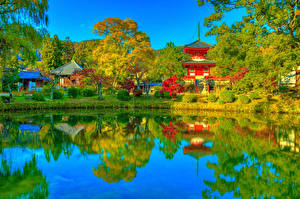 Картинка Япония Киото Парк Храм Пагоды Пруд Осенние Кустов Дерево Daikaku-ji
