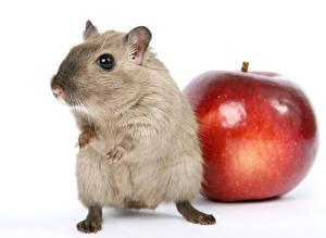 Картинка Мыши Яблоки Крупным планом Белый фон животное