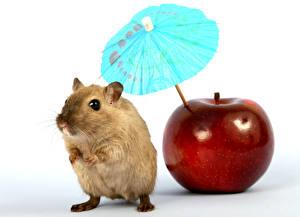 Картинка Мыши Яблоки Зонтом Красный Животные