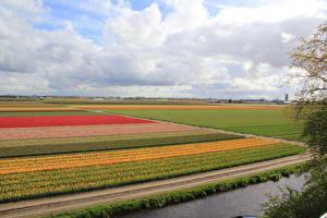 Фотография Нидерланды Поля Разноцветные Keukenhof Gardens