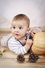 Обои Тыква Грудной ребёнок Мальчишки Шишки Взгляд Дети