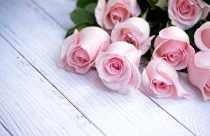 Картинки Роза Розовая Доски Шаблон поздравительной открытки цветок