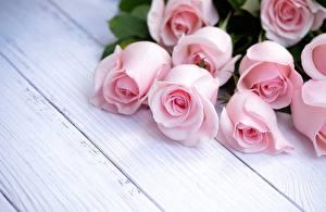 Картинки Розы Розовый Доски Шаблон поздравительной открытки Цветы