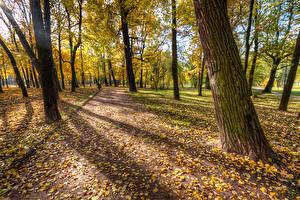 Картинки Россия Санкт-Петербург Парки Осенние Листья Дерево Park Ekaterinhof
