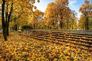 Фото Россия Санкт-Петербург Парки Осенние Лист Деревья Лестница Park Ekaterinhof Природа