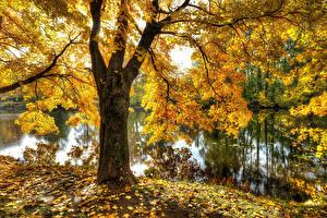 Картинка Россия Санкт-Петербург Парк Осенние Пруд Деревьев Листья Park Ekaterinhof