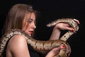 Обои для рабочего стола Змея На черном фоне Руки Шатенки молодые женщины Животные