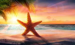 Обои Морские звезды Море Вечер Рассвет и закат Лето Песок Пляж Природа