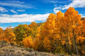 Обои Штаты Лес Осенние Калифорния Дерево Природа