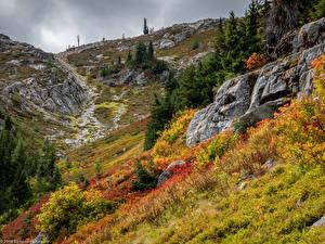 Картинки США Парки Горы Трава Ель North Cascades National Park Природа