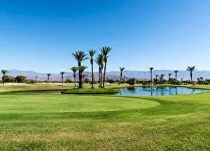 Фотография Штаты Пруд Поля Гольф Калифорнии Пальмы Газоне Borrego Springs Resort Golf Course Природа