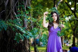 Картинки Азиатки Размытый фон Ветки Платья Брюнетка Позирует девушка