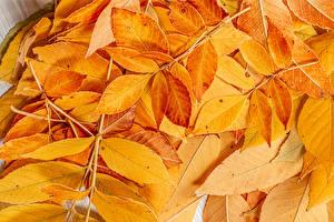 Обои Осень Ветки Листья Природа картинки