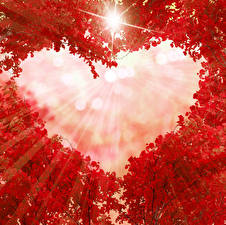 Картинка Осень Ветвь Красная Сердца Лучи света Шаблон поздравительной открытки Природа