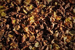Картинка Осенние Листва Сухой Природа