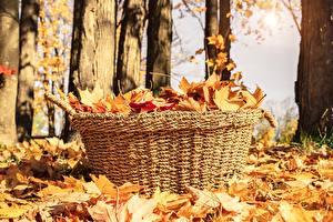 Фотография Осенние Листва Корзина Природа
