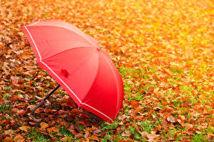 Фотография Осенние Трава Листва Зонт Красный Природа