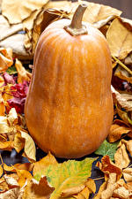 Картинка Осень Тыква Вблизи Листья Пища