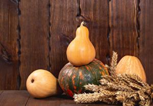 Картинки Осенние Тыква Стене Доски Колоски Природа