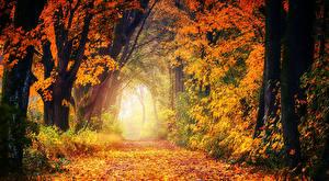 Фото Осенние Тропа Деревья Листья