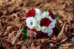 Обои Букеты Боке Листва Цветы