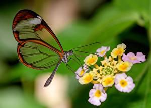 Фото Бабочка Крупным планом Размытый фон