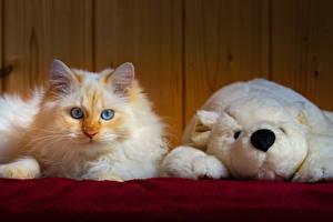 Фотографии Кот Игрушка Мишки Взгляд животное