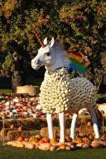 Фото Оригинальные Лошадь Тыква Скульптура Единороги