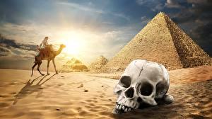 Фото Пустыни Черепа Верблюды Песок Пирамиды Природа