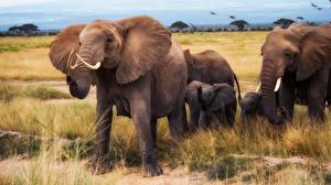 Картинка Слоны Детеныши
