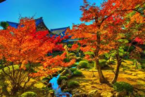Обои Япония Киото Осенние Дерево Ручей HDR