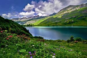 Фотографии Озеро Гора Швейцария Луга Альпы Траве Engstlen Lake Природа