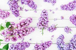 Обои для рабочего стола Сирень Доски цветок