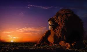 Картинка Львы Рассвет и закат Небо Солнце Животные