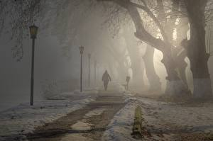 Фотографии Парк Тумане Уличные фонари Дерево Тропинка Гуляет город