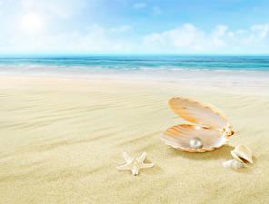 Фотография Жемчуг Ракушки Море Пляжа Песок Размытый фон