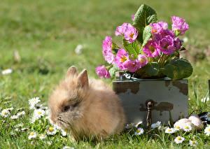 Обои Кролики Детеныши Траве Пушистый