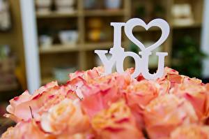 Обои для рабочего стола Роза Любовь День святого Валентина Букеты Размытый фон Английский Сердечко Цветы