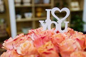 Фотографии Роза Любовь День святого Валентина Букеты Размытый фон Английский Сердечко Цветы