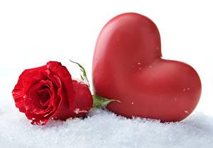 Обои Розы Снег Сердца Красный Цветы