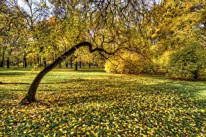 Картинка Россия Санкт-Петербург Парк Осень Дерева Листья Park Ekaterinhof