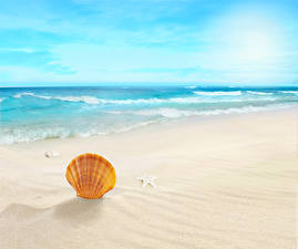 Фотографии Море Волны Ракушки Пляжи Песка Звездочки Природа