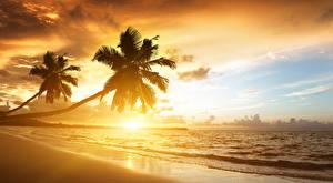 Обои Рассветы и закаты Берег Тропический Море Пальма Природа