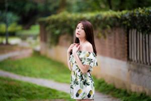 Фото Азиатки Боке Позирует Платья Рука Шатенки Миленькие девушка