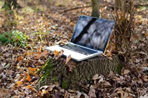 Фотография Осенние Листья Пень Ноутбуки Природа